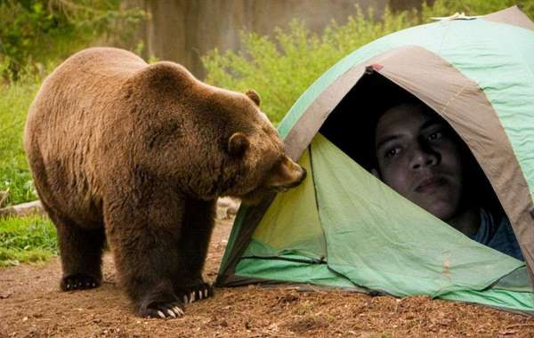 Should Be Afraid Of Animal Attacks In Tents? Here's The Answer